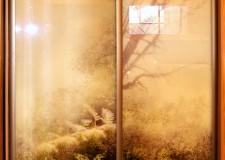 Шкаф-купе с фотовитражом «Лес»
