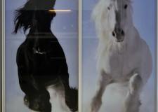 Фотовитраж для шкафа-купе «Две лошади»
